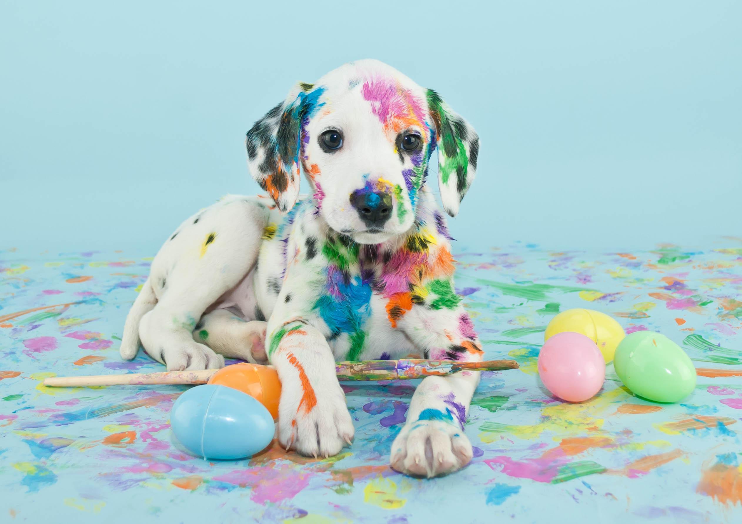 Puppy proof
