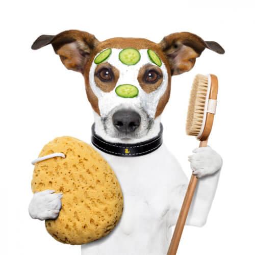 Puppy Brush
