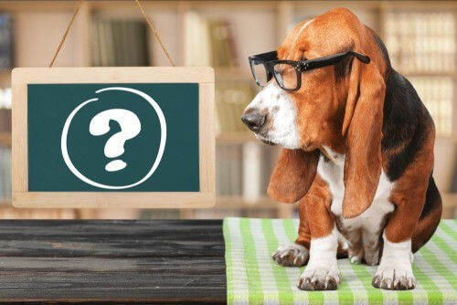 puppy questions